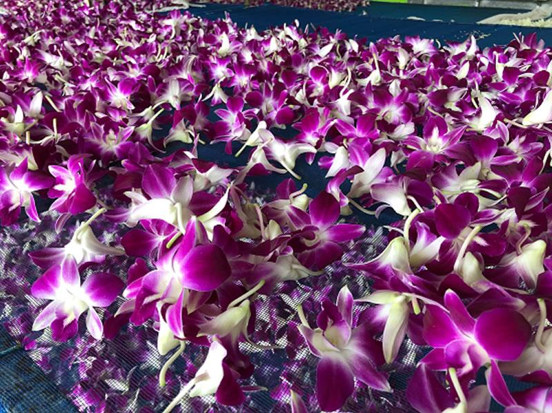 生花ハワイアンレイ 紫